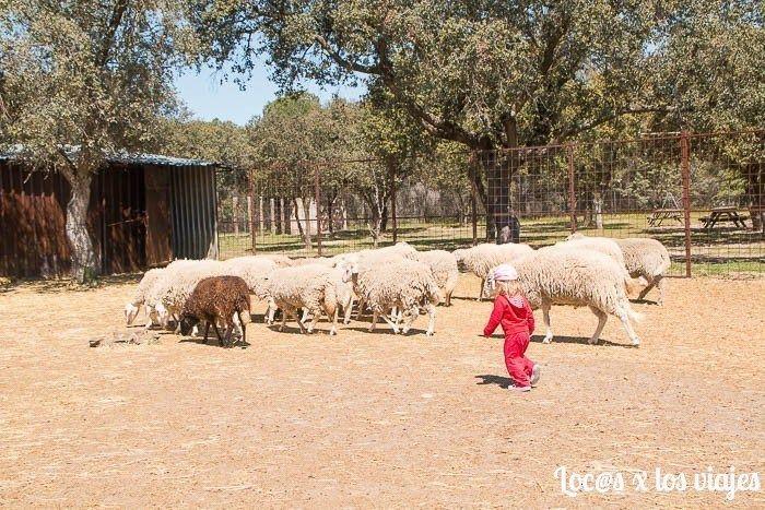 Granja-Escuela-planes-con-ninos-en-madrid