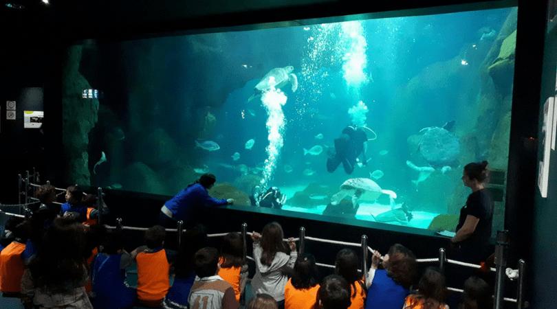 planes con niños en asturias acuario gijon